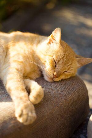 Cute orange cat sleeping outdoors under rays of sun Фото со стока