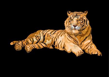 tigres: Siberia Tigre tumbado aislados en negro backgrount
