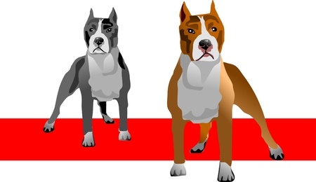 illustration of an American Pit bull Terrier in color and  gray