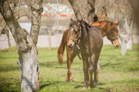 confined space: horses Stock Photo