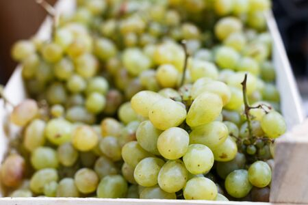 Grape. Wine grapes background. White grapes at the market. Stock Photo