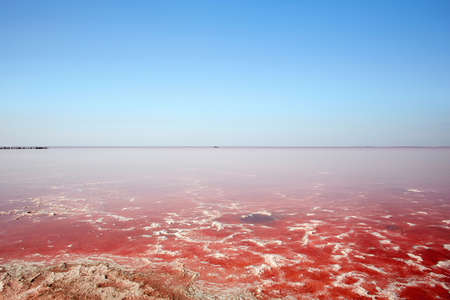 Beautiful pink salt lake on a sunny day in Crimea