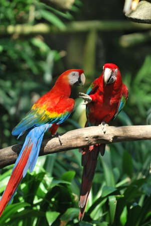 Colorful parrots playing
