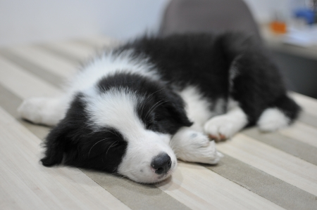 Puppy sleeping on the table