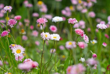 Close-up van bloemen van roze en witte bloemen in het gras