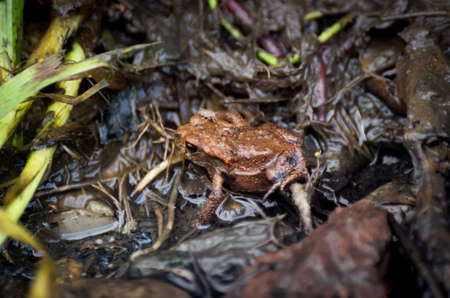 Young European common toad hiding in wet dirt with a fly and earthworms around