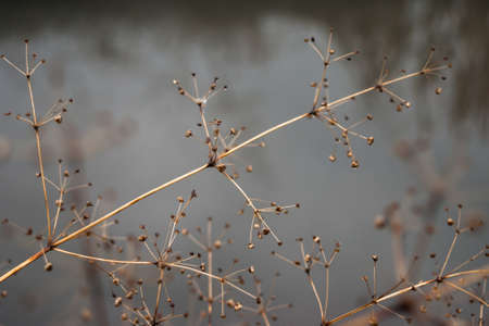 Change of seasons concept: faded stems over frozen icy river or lake in late autumn or early winter Stock Photo