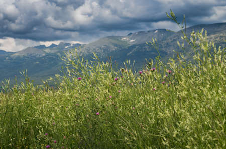Tall grass yellow and purple flowers with blurred mountain peaks stock photo tall grass yellow and purple flowers with blurred mountain peaks and cloudy sky in the background mightylinksfo