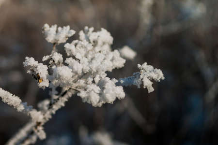 Winter Theme Concept: Closeup Of Frosted Weeds Branch Under The Snow, Blurred Background 免版税图像