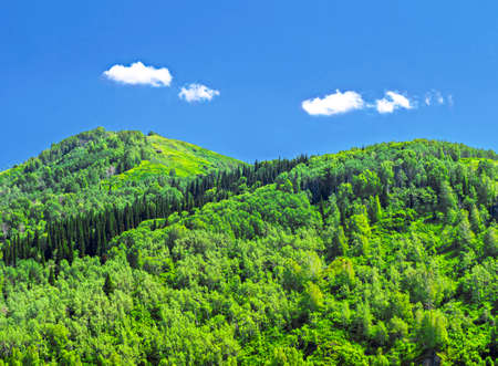 Mountains Covered With Thick Green Forest, Blue Sky and White Clouds.  Sunny Summer Day. Altai Mountains, Kazakhstan.