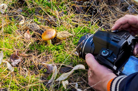 A Photographer Shooting Macro Scene Outdoor. Hands Holding a Digital Camera in Live Preview Mode Pointing at a Mushroom on the Forest Floor with Pine Needles, Cones, Dried Leaves and Green Moss. Imagens