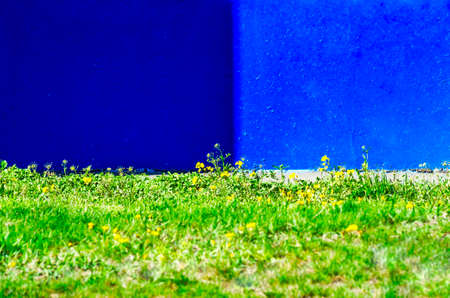 Bright Green Lawn and Painted Blue Wall with Shadow in Background. Stock Photo