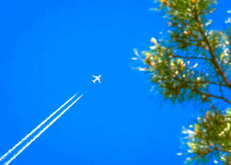 Traveling, Vacation, Transportation Concept: a Jet Airplane with White Contrail in Blue Sky Over the Pine Tree Top Branches.