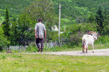 A Farm Worker Going Down the Rural Road and a White Nanny Goat Going Opposite Way on a Sunny Summer Day.