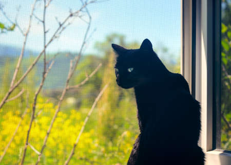 Black Cat on the Windowsill on a Hot Summer Day.