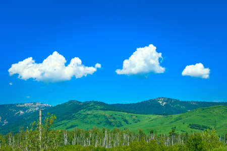 Birch Pine Trees, Highland Valley, Power Line, Blue Sky and Three White Clouds over Mountains on a Sunny Summer Day.