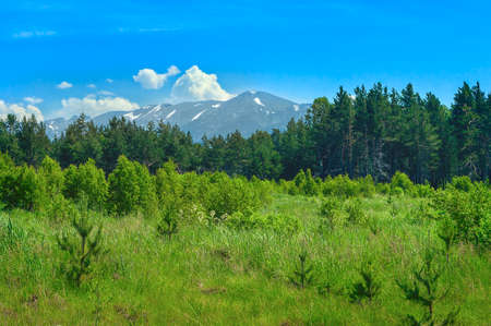 Opening in a Pine Forest, Blue Sky and White Clouds over Mountains on a Sunny Summer Day.