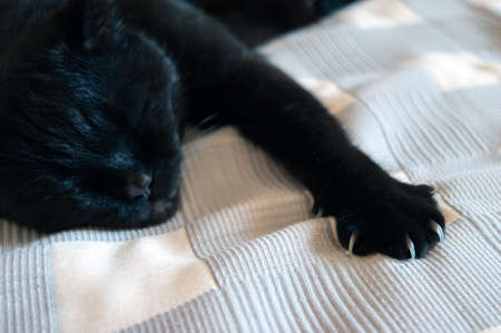Black Cat Sleeping on a Plaid Blanket, One Paw with Claws Out.