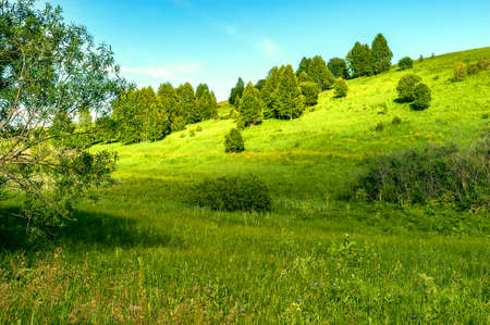 Sunny Spots on Grassy Hillsides with Birch Trees on a Summer Day.