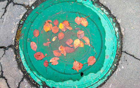 Yellow and Orange Autumn Leaves in a Puddle on a Manhole Green Cover, Cracked Asphalt Around.