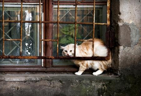 vagabond: Street Cat on the windowsill Stock Photo