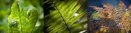 Fern leaves in different seasons  Closeup photo set photo