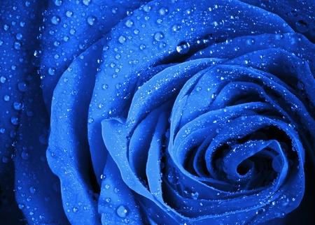 Blu fiore di rosa con gocce d'acqua stilizzata close-up foto con profondità di campo