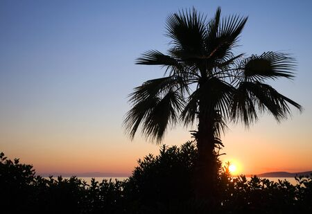 Palm Tree against the tropical sunset on the coast of Mediterranean sea photo