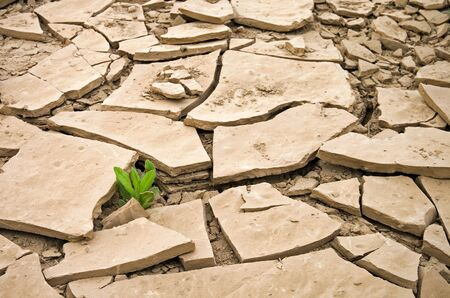 Closeup photo of a wild plant growing in a cracked dry ground Stock Photo - 15471243