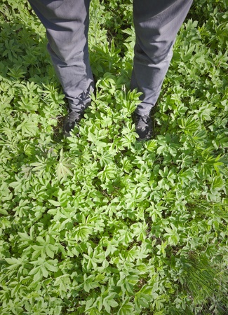 Legs of a man in gray jeans and boots standing on the fresh green grass photo