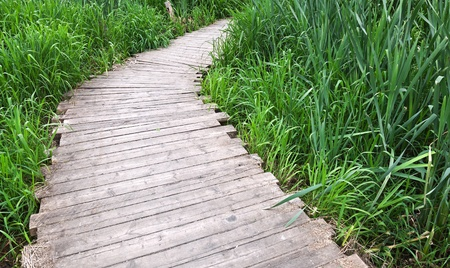 footway: Old planked footway in the park on river coast in Moscow, Russia