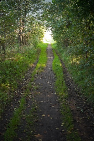 shadowed: Shadowed forest road with glowing end Stock Photo