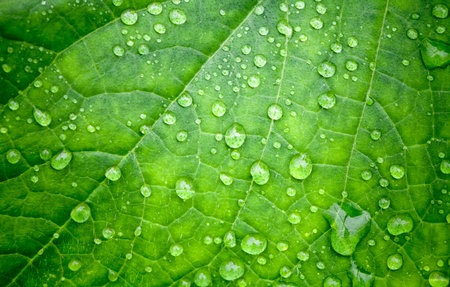 natural vegetation: Natural green background with leaf and drops of water