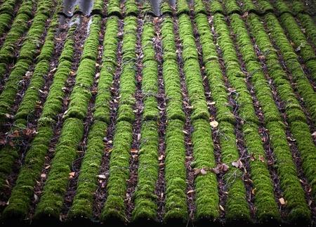 Leuchtend grüne moosigen gefliesten Dachschiefer Dach Hintergrundtextur Standard-Bild