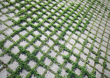 road paving: Abstract Grass ecol�gico textura de fondo crece a trav�s de la pavimentaci�n de carreteras