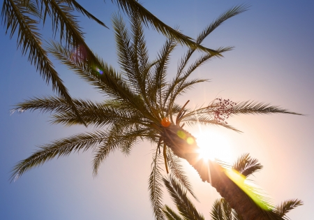 Palm leaves in the sunshine with sunbeam and beautiful lens flare; photo