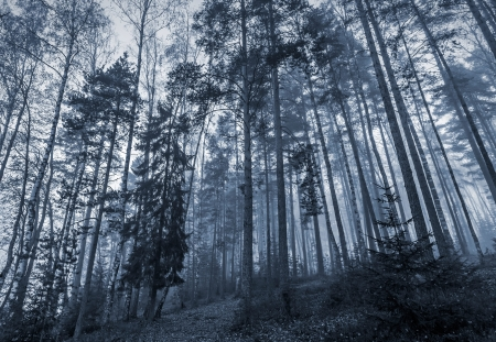 dark jungle green: Early morning in a dark forest with fog and tall trees