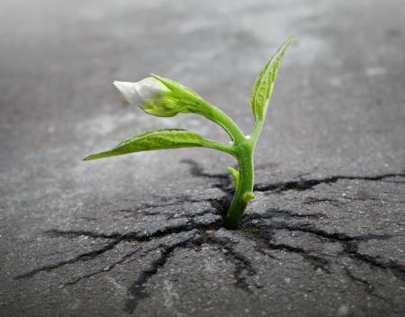 Kleine bloem spruit groeit door stedelijke asfalt grond