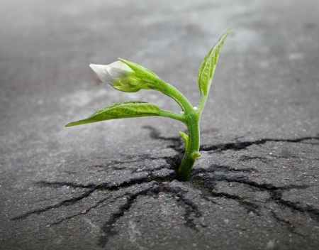 Little flower sprout  grows through urban asphalt ground photo