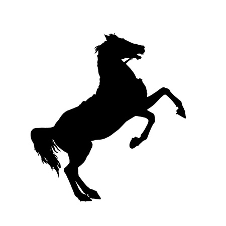 Isolated on white rearing up wild horse detailed black silhouette photo