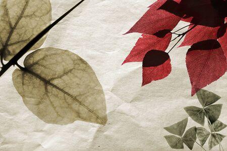 Dry leaves on old toned paper background  Herbarium illustration Stock Illustration - 19316509