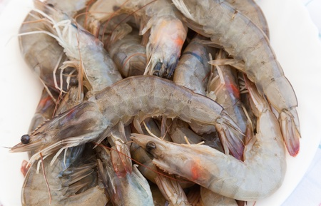 Raw shrimps lay on white plate photo