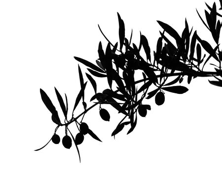 Black silhouette of olives on branch isolated on white photo