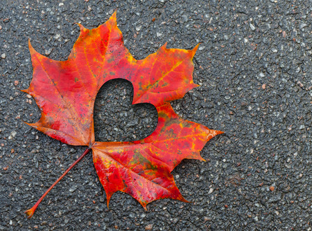 Fall in love photo metaphor. Red maple leaf with heart shaped hole lays on dark asphalt road photo