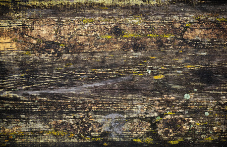 Grunge wet wooden surface background texture with cracked paint and lichen photo
