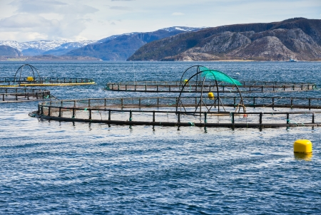 commercial fisheries: Norwegian fish farm for salmon growing in fjord
