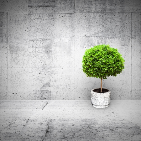Abstract white interior with concrete walls and small green decorative tree growing in a pod photo