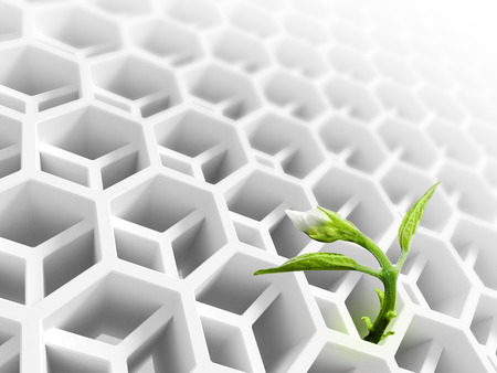 Little green flower sprout  grows through abstract white modern honeycomb structure photo