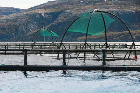 Norwegian fish farm cages for salmon growing in fjord photo