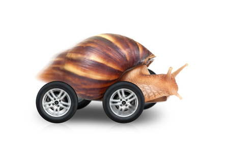 Big brown snail is fast driving on wheels isolated on white background photo